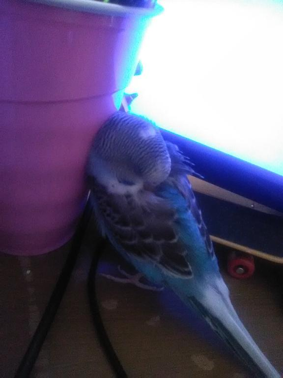 Trickee's Ongoing Picture and Video Thread-head-back-sleeping-against-monitor.jpg