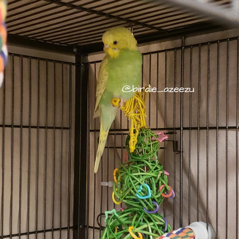 Birdie & Azeezu-im-star.jpg
