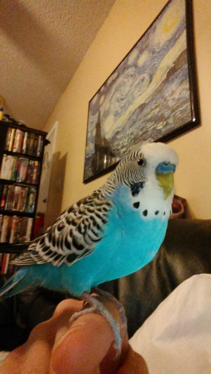 Buddy: pictures of my new bird-imag0050.jpg