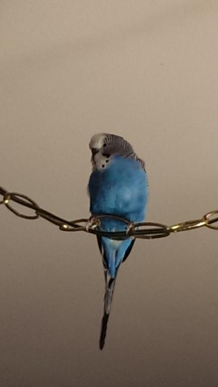 Buddy: pictures of my new bird-imag0091.jpg