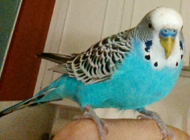 Buddy: pictures of my new bird-imag0365_1_1.jpg