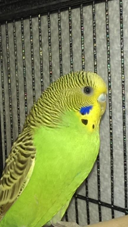 help with new/aggressive birds-imag0427.jpg