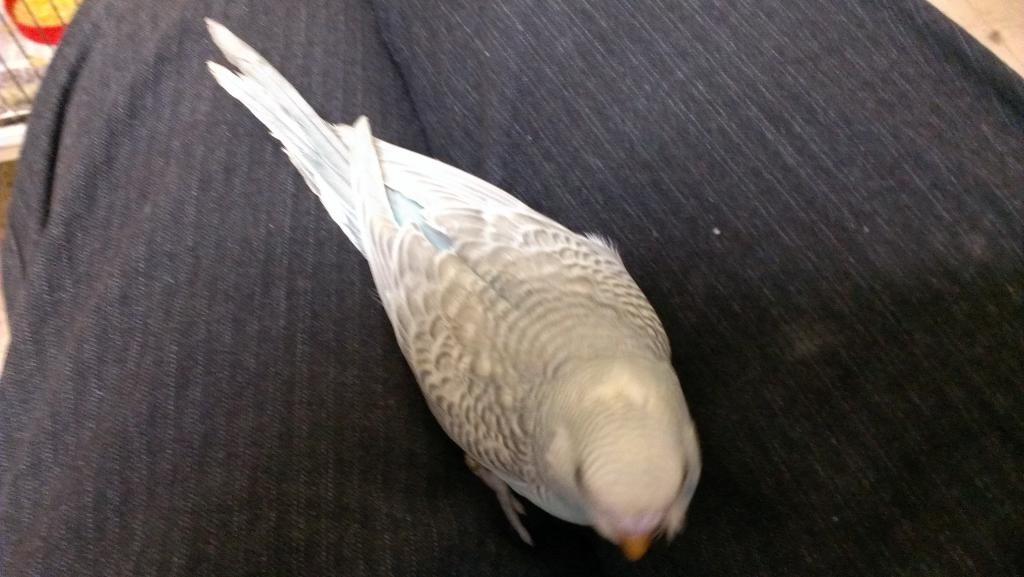 Help with Sexing my Keet-imag0921.jpg