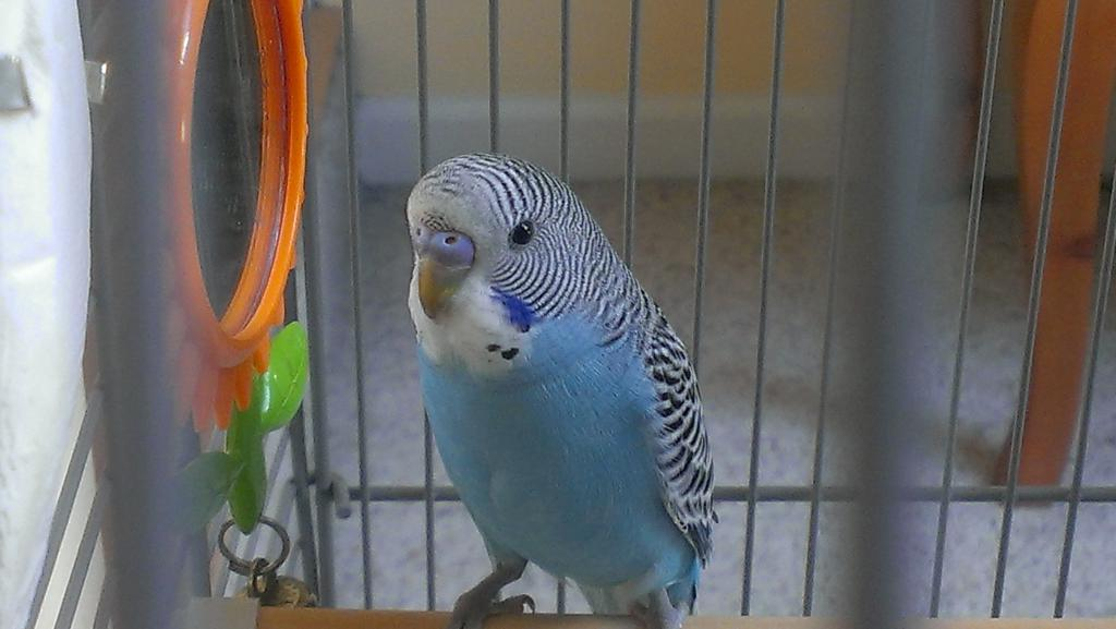 My Keet Mutation-imag1117.jpg
