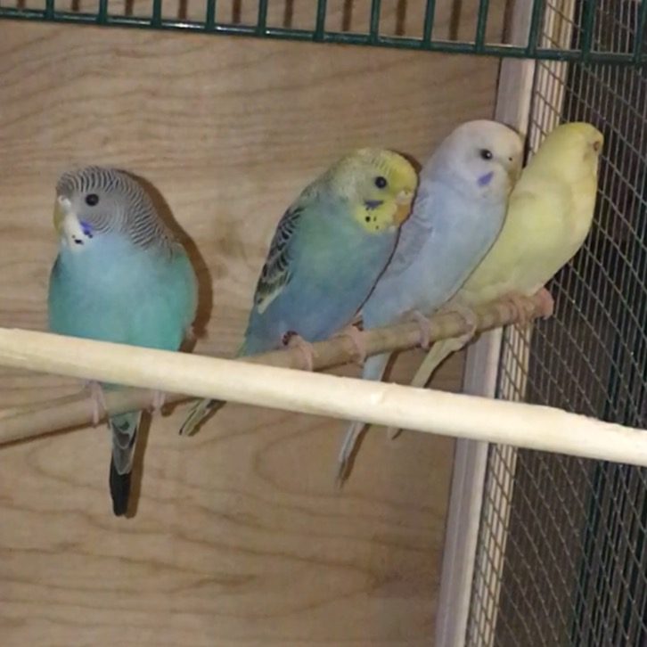 My Flock-image.jpeg