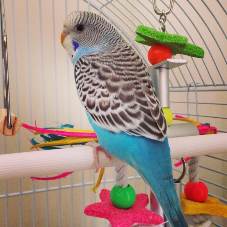 New to the world of budgies-image.jpg