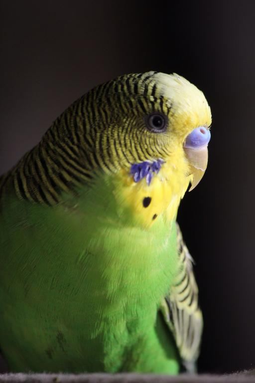 JoJo Portrait-image.jpg