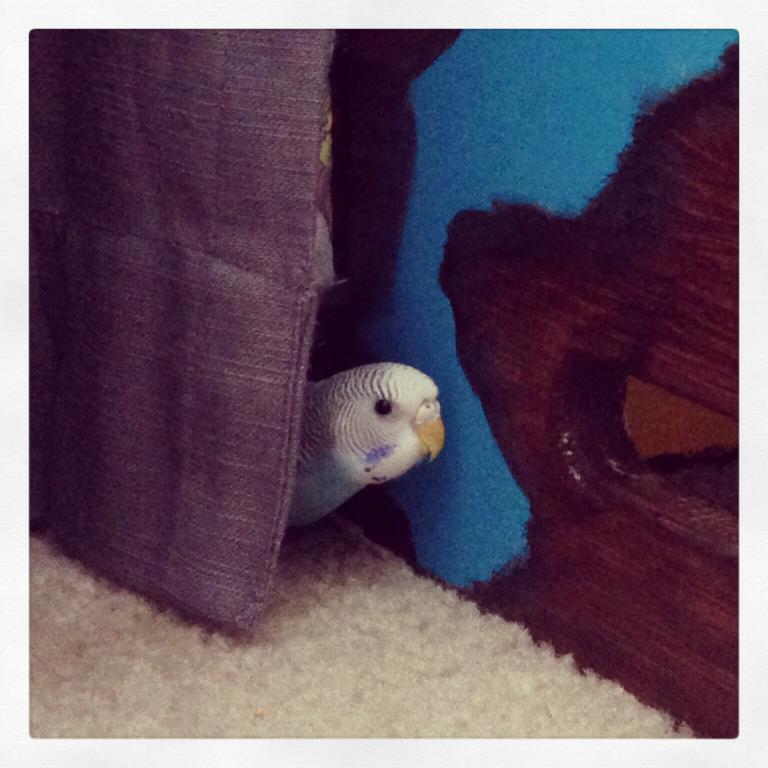 Peek-a-boo-image.jpg