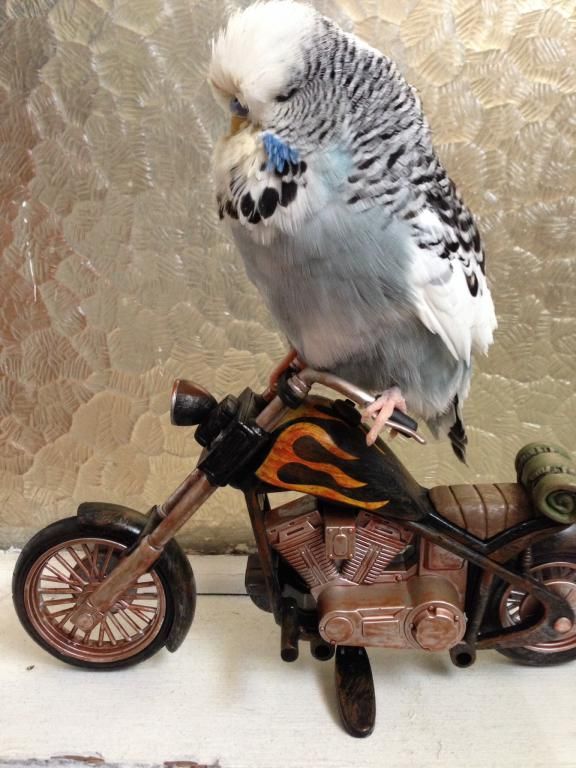 My Skatebird-image.jpg