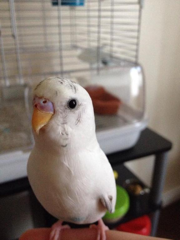 I'm worried about my budgie!-image.jpg