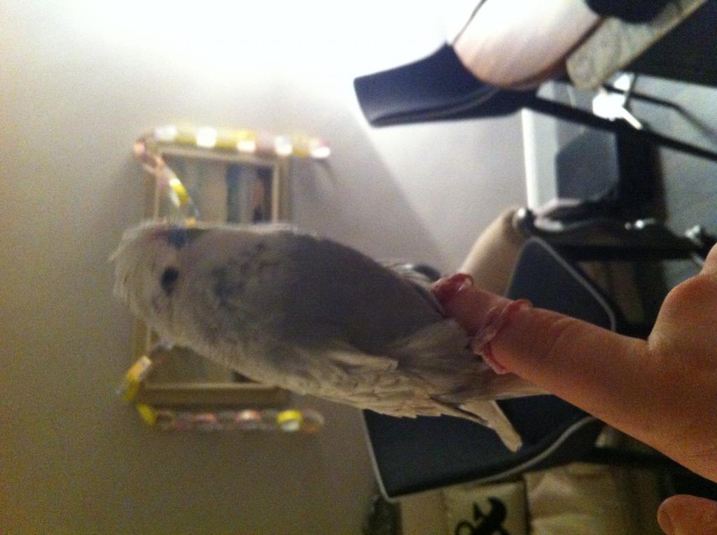 Meet Sammy-image.jpg