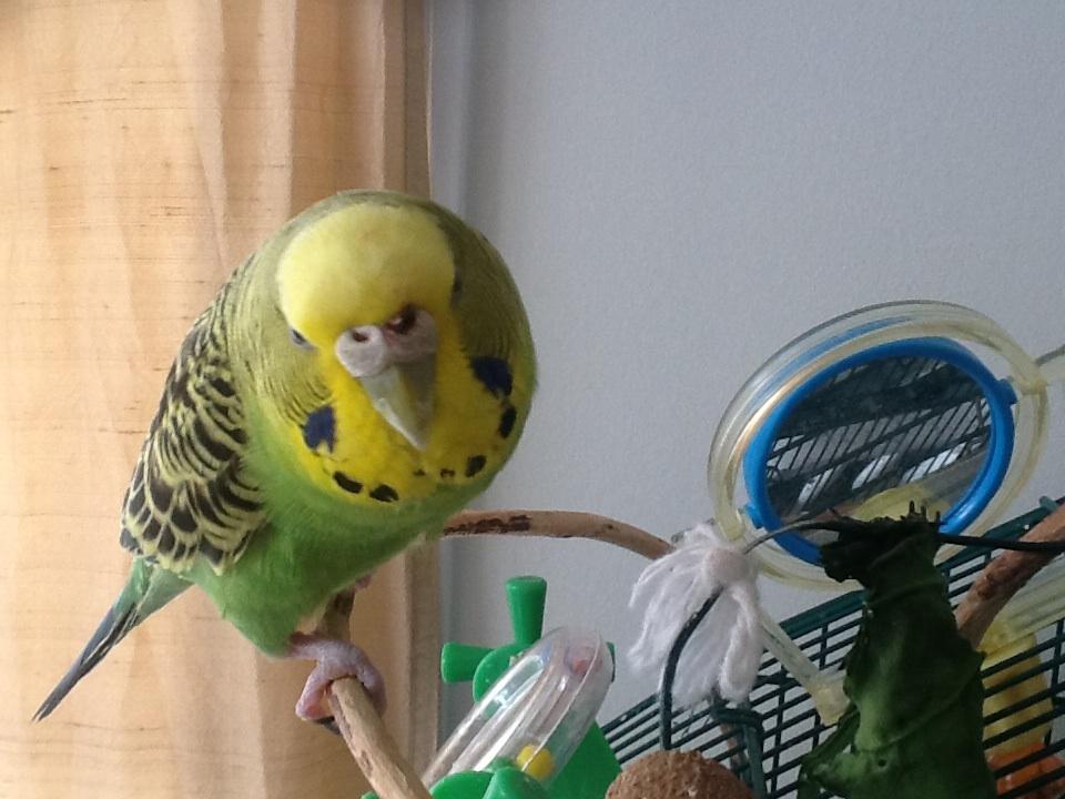 My poor bird has blood on her nose :(-image.jpg