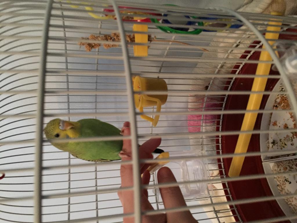 Zoey starting to trust!-image.jpg