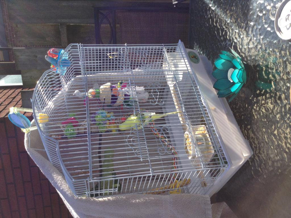 Bertie on the patio!-image.jpg