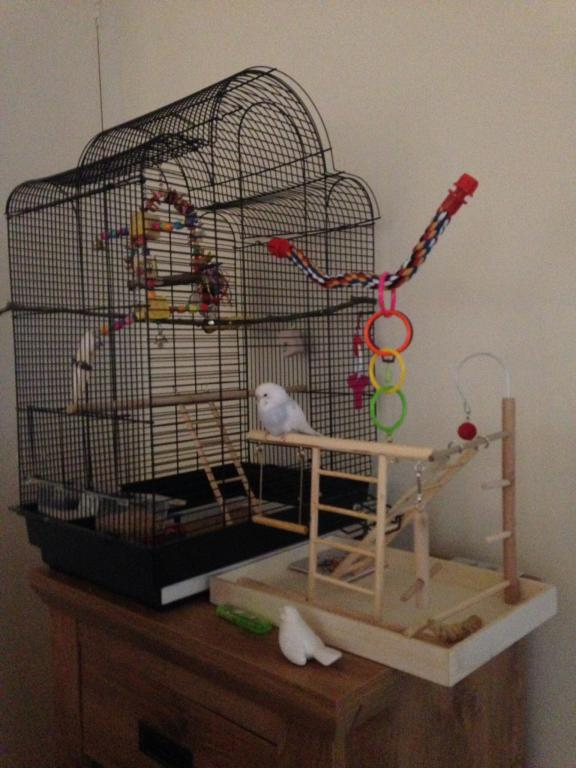 Horatio and her play area!-image.jpg