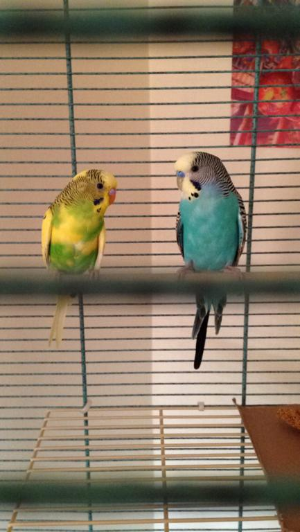 Bad Budgies?-image.jpg