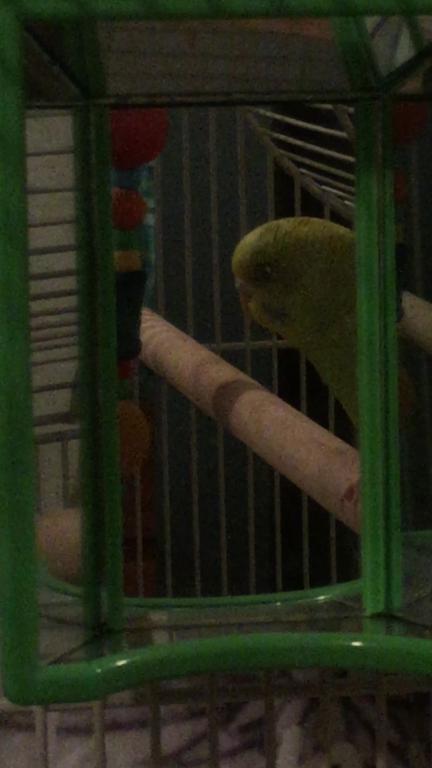 My bird has something in its eye-image.jpg