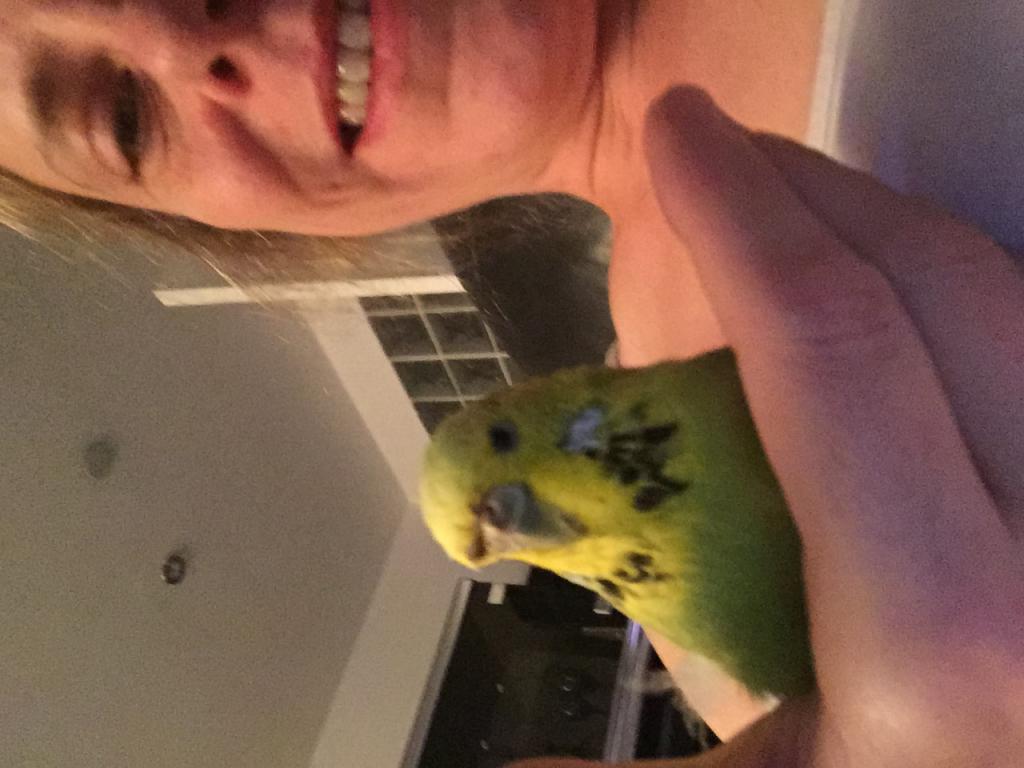 Budgie selfie-image.jpg