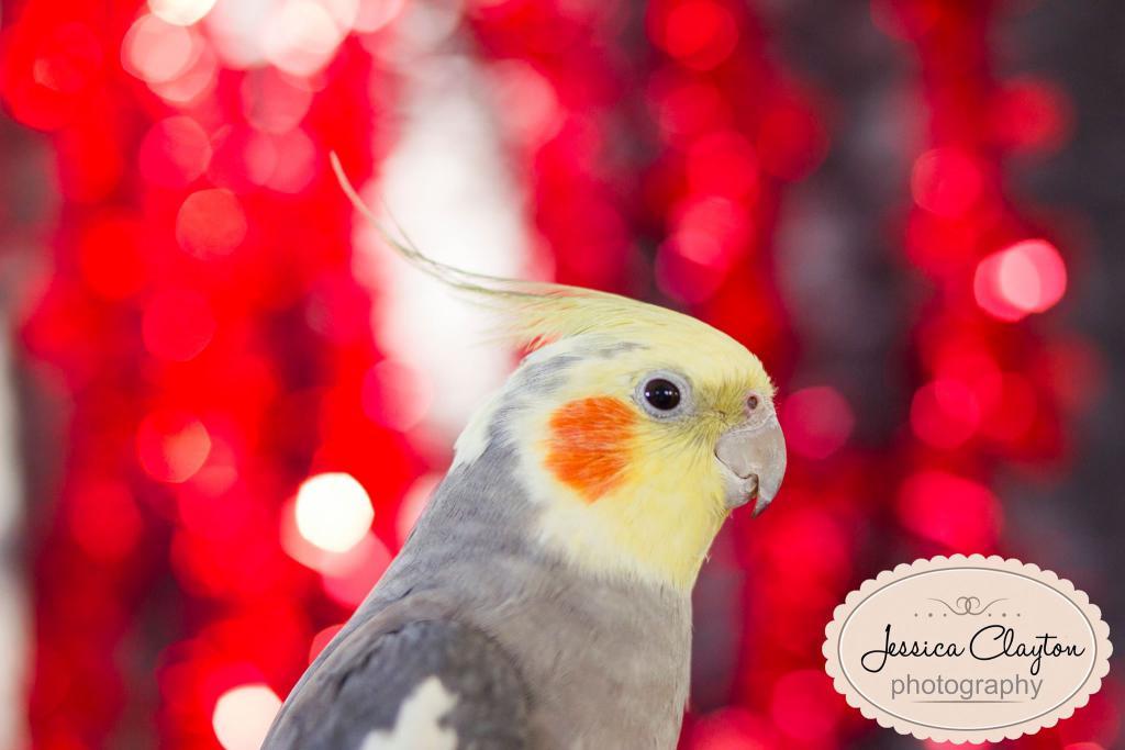 Rickey's Valentine shoot-image.jpg