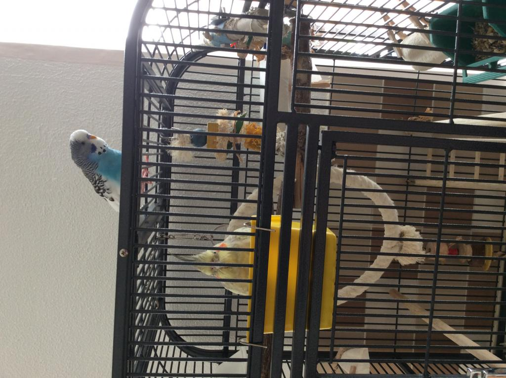 Rosieann's Flock (ongoing thread)-image.jpg
