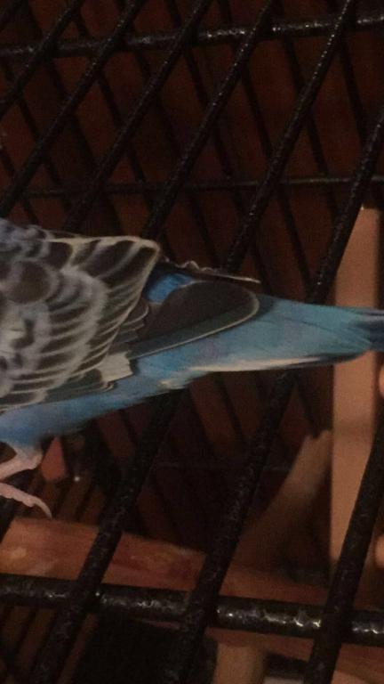 Wrinkled flight feathers?-image.jpg