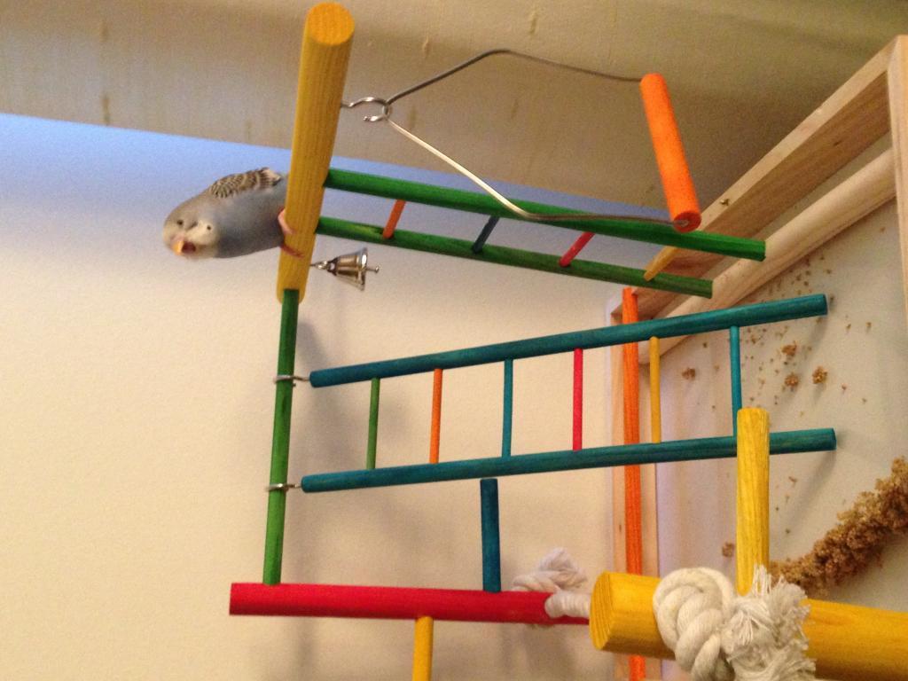 Oliver's new PlayGround!-image.jpg