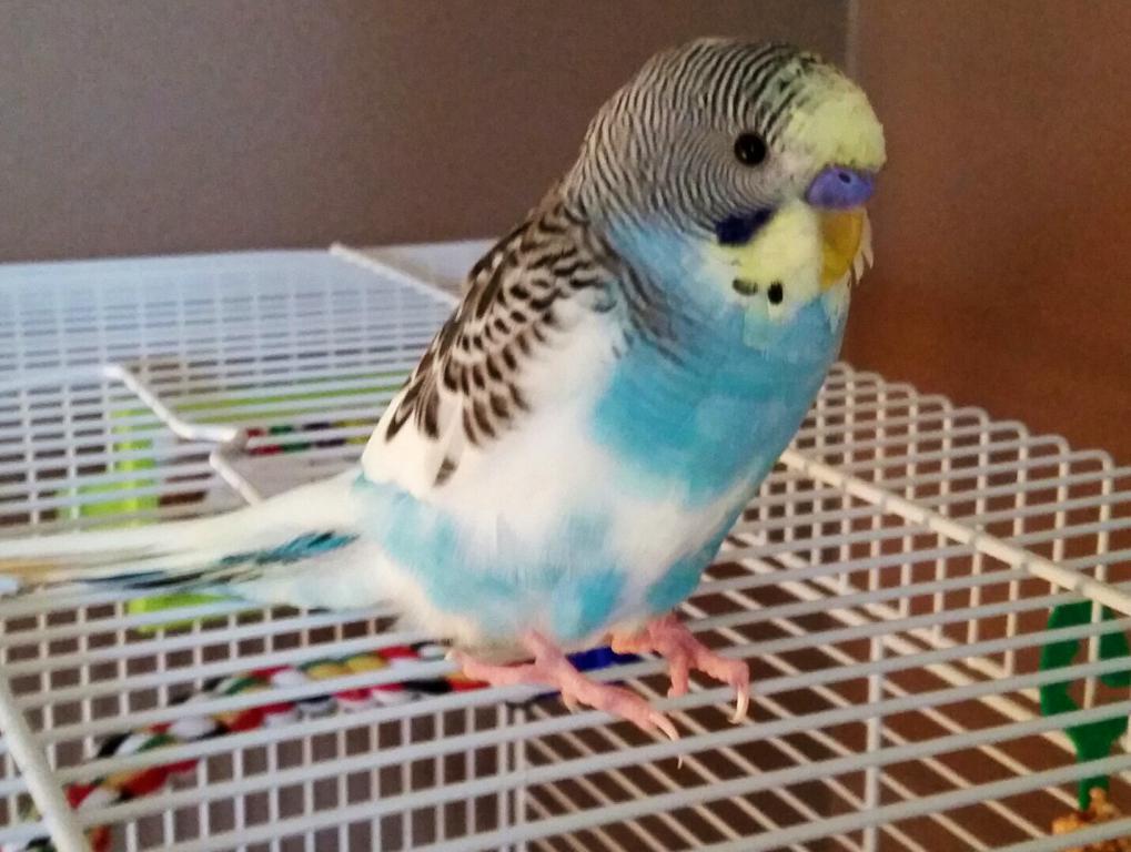 My sweet little guy (still nameless)-image.jpg