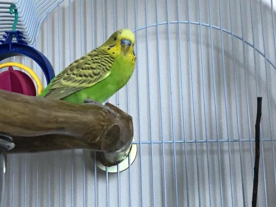 New budgie, is this a bad sign?-image0.jpg