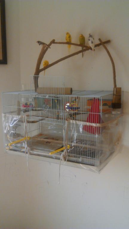Our Birds and Cage Setup-image00001.jpg