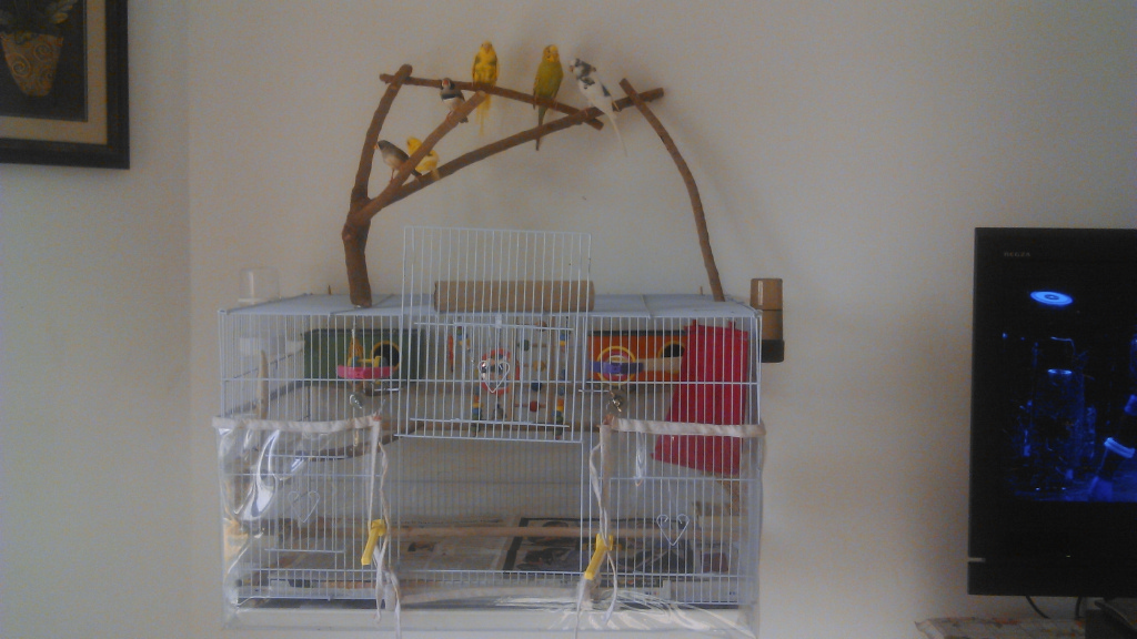 Our Birds and Cage Setup-image00002.jpg