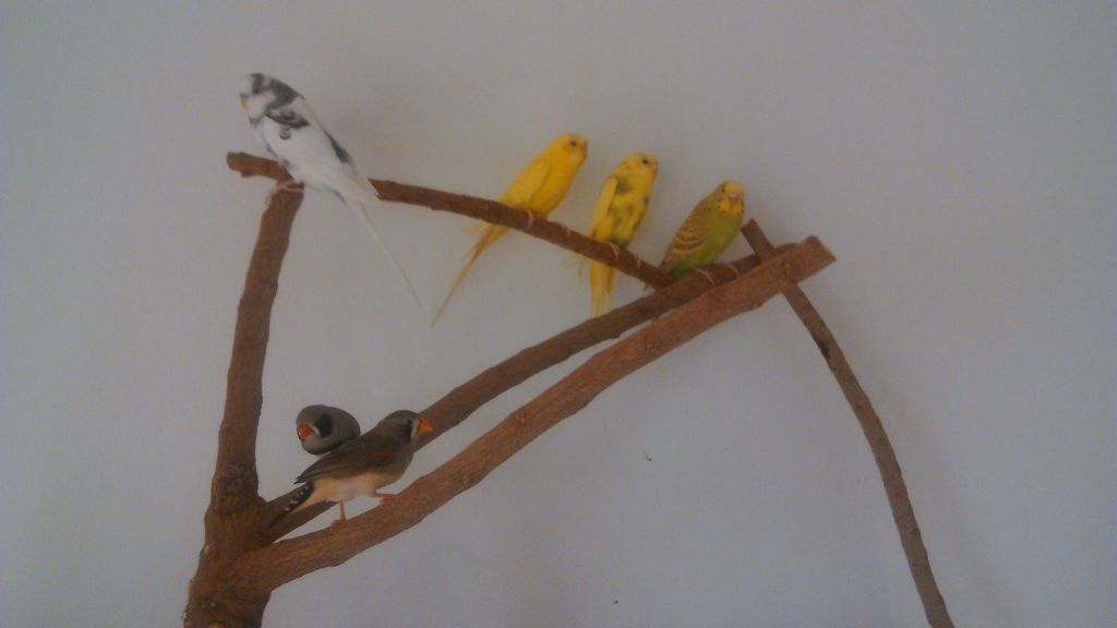 Our Birds and Cage Setup-image00005.jpg