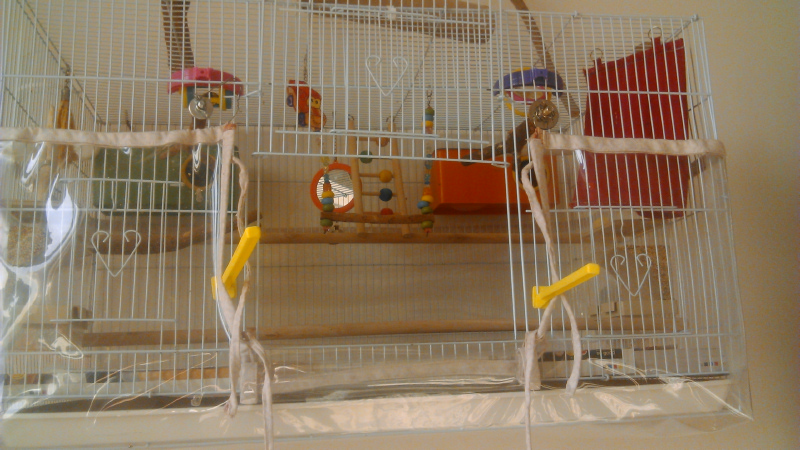 Our Birds and Cage Setup-image00006.jpg