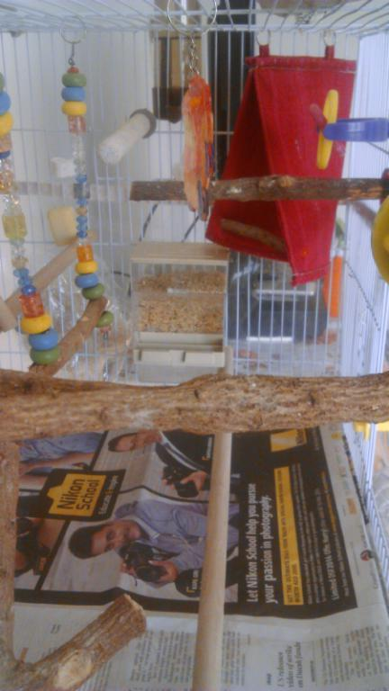 Our Birds and Cage Setup-image00007.jpg