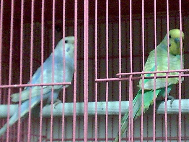Mutation please-image013.jpg