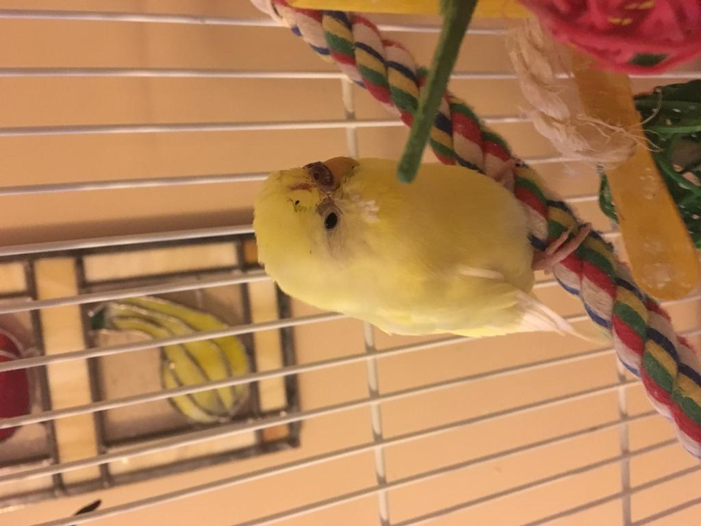 My budgie seems sick-image1.jpg