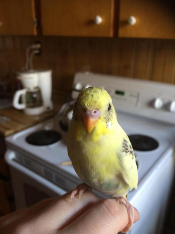 18 weeks old!-image_1418837832172.jpg