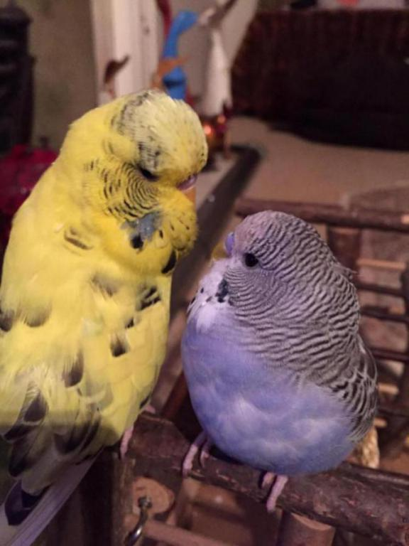 Could Lemmy be part show budgie??-image_1426836012403.jpg