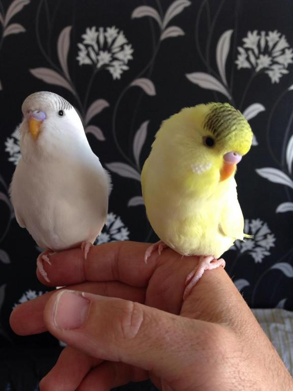 Charlie and lemon-image_1429690130868.jpg