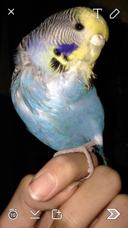 Feather plucking-image_1430051942709.jpg