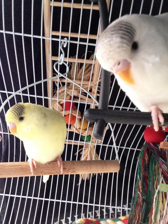 Charlie and lemon, sleepy time-image_1431628680013.jpg