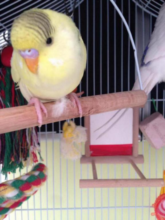 Charlie and lemon, sleepy time-image_1431628734306.jpg
