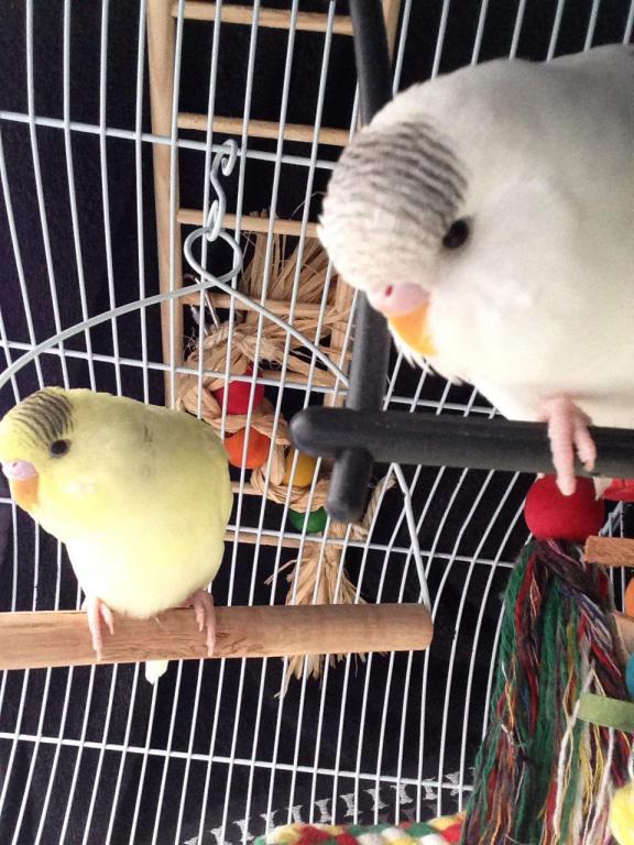 Charlie and lemon, sleepy time-image_1431628774267.jpg