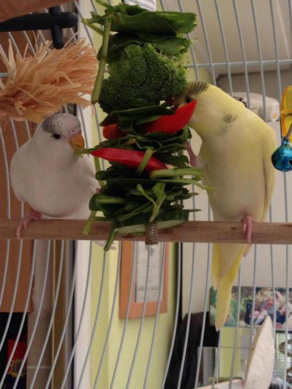 Charlie and lemon dinner time-image_1431793088785.jpg