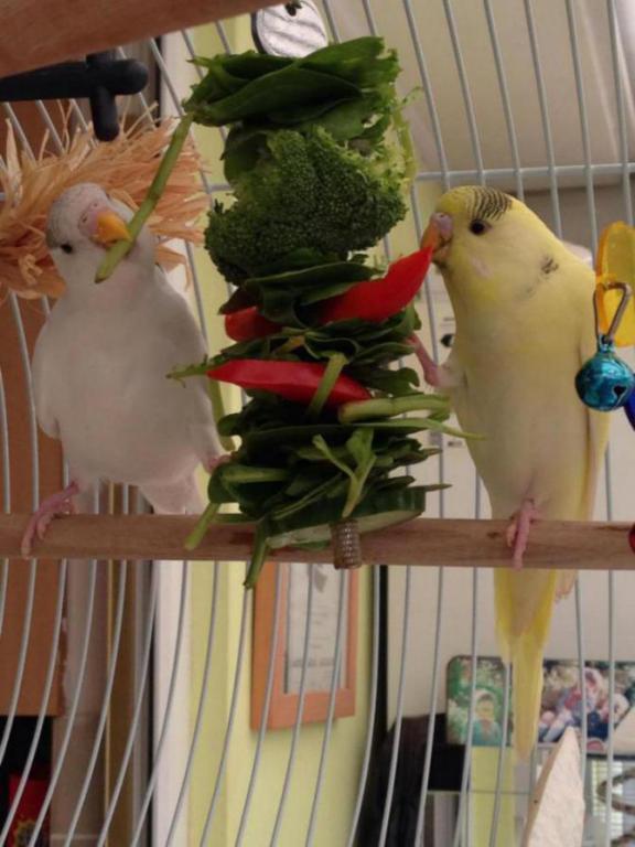 Charlie and lemon dinner time-image_1431793135720.jpg
