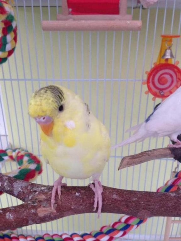 Charlie and lemon-image_1434388909713.jpg