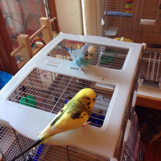 Dougie & Eric-image_1437901185140.jpg