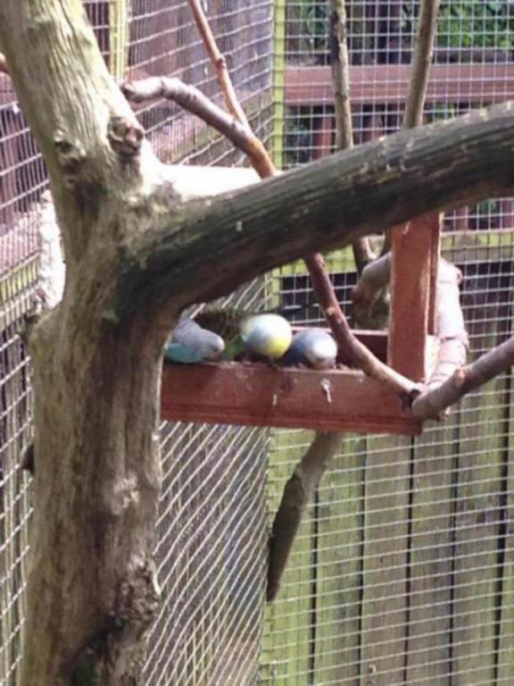 Visited a local Bird Sanctuary-image_1438960589401.jpg