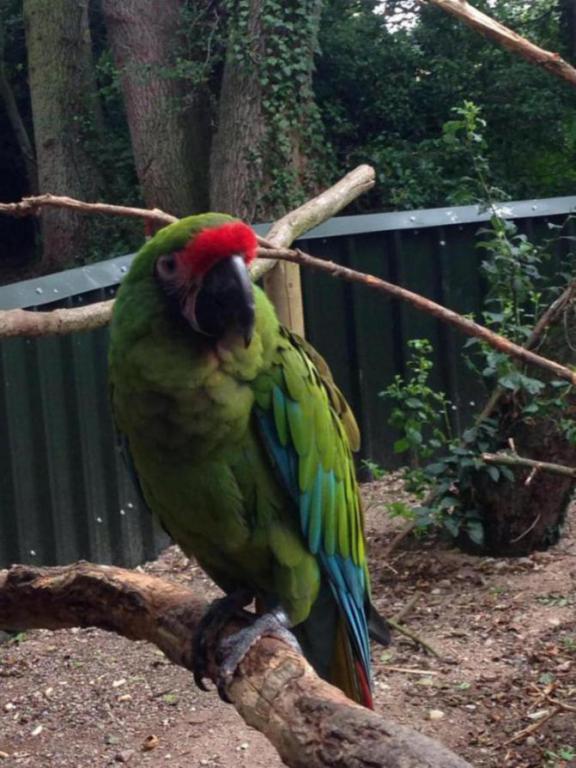 Visited a local Bird Sanctuary-image_1438960622834.jpg