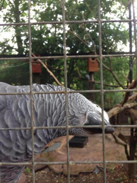 Visited a local Bird Sanctuary-image_1438960661132.jpg