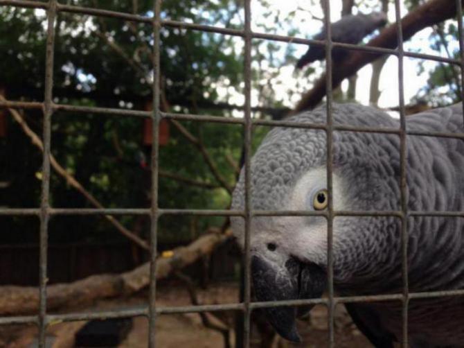 Visited a local Bird Sanctuary-image_1438960698831.jpg